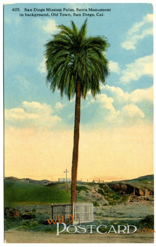 San Diego Mission Palm, Serra Monument in Background