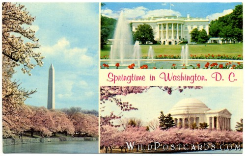 Springtime in Washington, D.C.