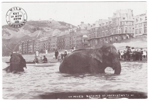 Mixed Bathing at Aberystwyth, Wales 1911 Vintage Postcard