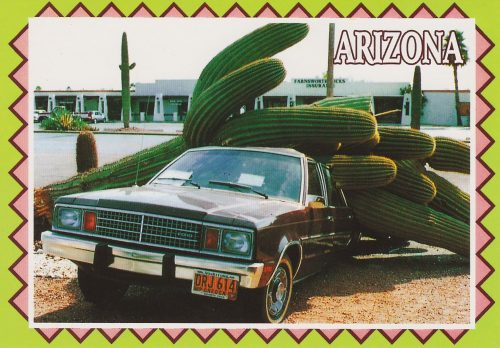 Arizona: Cactus Crushes Car (R23)