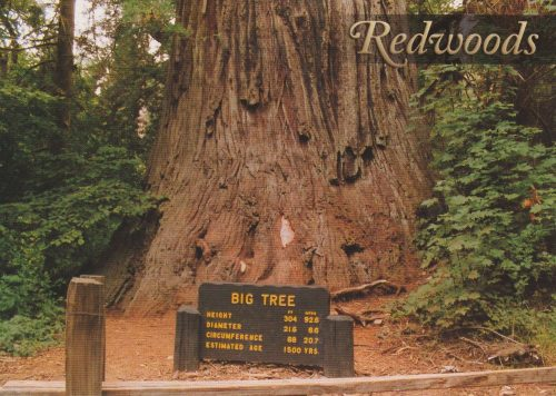 California: Redwoods (Q24)