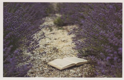 Book and Lavender Field (F13)
